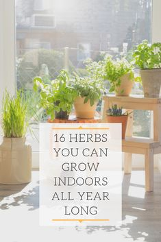 Herbs You Can Grow Indoors All Year Long These plants are lovely when grown small-scale in pots on a windowsill or in a window box herb garden.These plants are lovely when grown small-scale in pots on a windowsill or in a window box herb garden. Garden Types, Herb Garden Design, Diy Herb Garden, Garden Plants, Box Garden, Vegetable Garden, Meadow Garden, Party Garden, Herb Garden In Kitchen