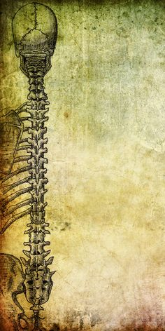 My study of the human spinal column (inked and shaded version), with background courtesy of . I think this would make interesting stationary, or maybe t. Medical Drawings, Medical Art, Medical School, Anatomy Art, Human Anatomy, Yoga Anatomy, Spine Drawing, Will O The Wisp, Medical Wallpaper