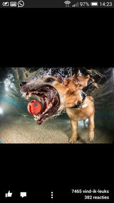 onderwater honden