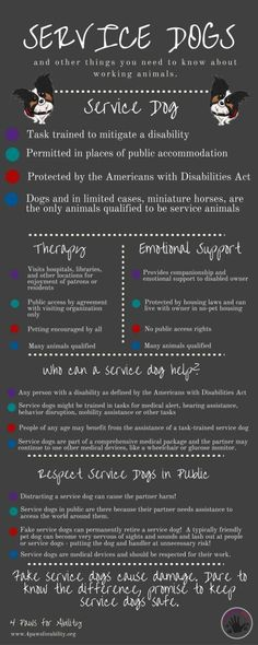 4 Paws for Ability: All About Service Dogs