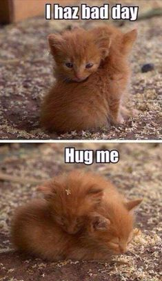 36 Absolutely Adorable And Funny Animals 36 Absolutely Adorable And Funny Animals. More funny animals here. Baby Animals Pictures, Cute Animal Pictures, Animals And Pets, Wild Animals, Baby Pictures, Cute Animal Memes, Cute Funny Animals, Cute Dogs, Animal Captions