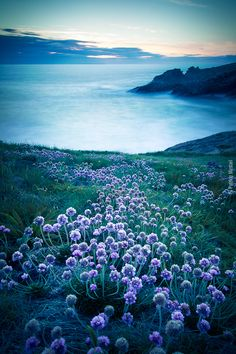 Quiberon - La côte sauvage by Patrice MESTARI   purple & blue