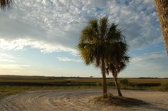 The palms at the end of Dondanville Road in St. Augustine, Florida. A romantic sunset spot to take your sweetie!  StAugTeam.com  Image by Sean Hess