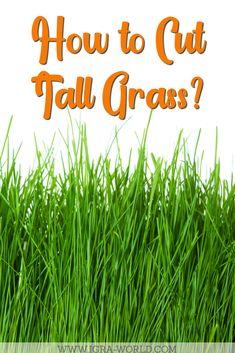 Do you want to learn how to cut tall grass? Here's a guide that shows you exactly what to do to restore your lawn to its former glory. To Mow Tall Grass its sometimes becomes a tedious job, by Reading the Article, Mowing Tall Grass will become simple. #igraworld #tallgrass #cuttallgrass #mowtallgrass #mowgrass #cutgrass #grass #lawncare