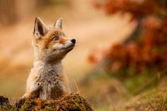 30 Awesome Animals Out And About This Autumn: https://goo.gl/4p4Efb