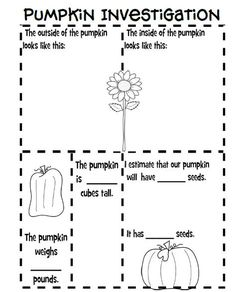 Fun For First: Pumpkin Investigation