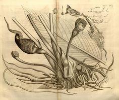 Van Rheede, 1692-1703 - Hortus Indicus Malabaricus : - Biodiversity Heritage Library