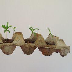 Semilleros de cilantro Cilantro, Planter Pots, Plants