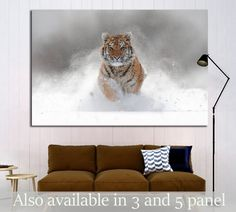 Tiger in wild winter nature. Amur tiger running in the snow №1831