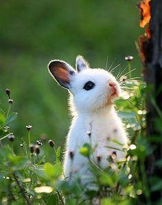 #planet_animals