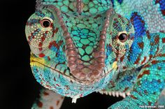 Colorful patterns of a lizard
