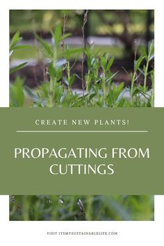Propagating herbs & plants from cuttings, or cloning herbs, is simple to do and will have you expanding those garden beds in no time flat. | It's My Sustainable Life @itsmysustainablelife #propagatingherbs #propagatingherbsinwater #propagatingherbsfromcuttings #waterpropagatingherbs #propagatingplants #herbgardening #itsmysustainablelife