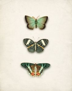 Items similar to Green Antique Butterflies Collage Art Print No. 2 Natural History Wall Decor 8x10 on Etsy