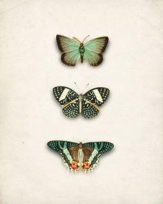 Green Antique Butterflies Collage Art Print No. 2 Natural History Wall Decor 8x10 #art #butterflies $14