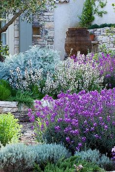 Full and pretty garden in purples and blue-greys. I've got to group more plants together to make mounds.
