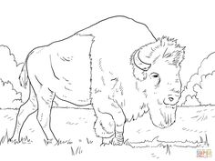 Bison Grazing on Grasses Coloring page | Free Printable Coloring Pages