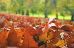 Autumn leaves in St. James's Park - Category:Leaves in autumn - Wikimedia Commons