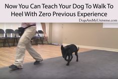 Training your dog is centered on building your relationship with your dog as well as implementing boundaries. Be firm but consistent and you'll see outstanding results when it comes to your dog training efforts. Guard Dog Training, Agility Training For Dogs, Basic Dog Training, Dog Training Videos, Training Quotes, Animal Magazines, Hypoallergenic Dog Food, Dog Whisperer, Dog Ages