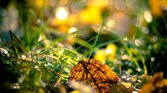 Autumn Fresh Season – 1080p HD Wallpaper Nature