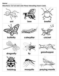 Insects Worksheet for Preschool. 24 Insects Worksheet for Preschool. Printable Preschool Bug Activities for Learning & Fun Free Kindergarten Worksheets, Worksheets For Kids, Printable Worksheets, In Kindergarten, Tracing Worksheets, Printable Coloring, Printables, Free Printable, Insects For Kids