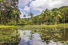 Descubra o Jardim Botânico de São Paulo. Um dos lugares mais agradáveis de toda a cidade e que contrasta com tudo que você está acostumado a ver em sampa.