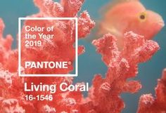 """Pantone has just announced its 2019 Color of the Year - Living Coral. That's right, not just coral, but living coral. """"An animating and life-affirming coral . Coral Pantone, Pantone Color, Color Trends, Design Trends, Design Ideas, Palettes Color, Marine Style, Le Living, Design Industrial"""