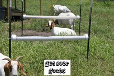 PVC Feeder - this simple feeder was made for goats but I think it would also be a good feeder for birds if put lower to the ground. It would be especially great for fermented poultry feed. Deer Feeder Plans, Deer Feeder Diy, Boer Goats, Pigmy Goats, Goat Feeder, Feeding Goats, Sheep Pig, Goat Barn, Nigerian Dwarf Goats