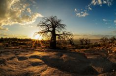 Kubu Island: A Desert Island of Baobabs and Ancient Fossils, Botswana Baobab Tree, Desert Island, Where To Go, Cool Places To Visit, Mother Nature, The Good Place, Travel Destinations, National Parks, Adventure