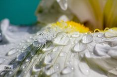 Flower fantasy by Alex Edo on 500px