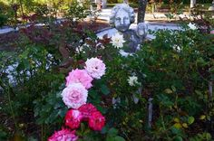 When she wasn't traveling with the circus, Mable Ringling cultivated a beautiful rose garden at her winter home in Sarasota, Florida.