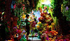 'Hanoi Flowers' - Photography by Paul Hillier