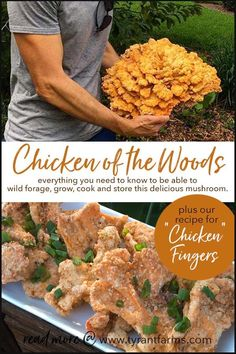 How to find, identify, grow, and cook chicken of the woods mushrooms. How to find, ide Edible Wild Mushrooms, Stuffed Mushrooms, How To Grow Mushrooms, Growing Mushrooms At Home, Garden Mushrooms, Vegetarian Recipes, Cooking Recipes, Healthy Recipes, Cooking Cake