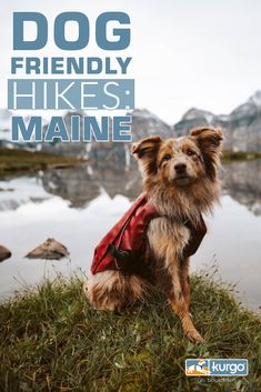 Looking for Dog-Friendly hikes in Maine? We've got you covered! Dog Travel, Travel Usa, Dog Friendly Hotels, East Coast Road Trip, Hiking Dogs, Get Outdoors, Camping Survival, Camping With Kids, Dog Friends