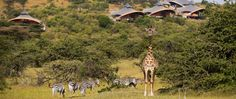 richard branson mahali mzuri kenya safari lodges designboom