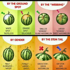 We all want sweeter watermelons, but sometimes you get one so bland and dry. This nifty tip will help you choose the best one at the farmers market! Sweet Watermelon, Good Food, Yummy Food, Food Facts, Baking Tips, Kraut, Fruits And Veggies, Good To Know, Healthy Eating