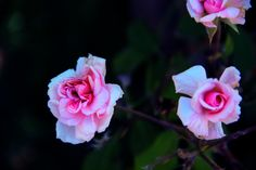 #Photography #Flower