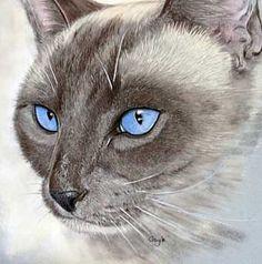cats+siamese+art   Siamese cat art funny pictures- best Siamese cat art pictures