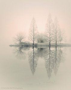 landscape photography, monochromatic, nature, fog, foggy, trees, winter, 8 x 10 print. $50.00, via Etsy.