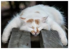 Kitty mojo, can sleep anywhere!