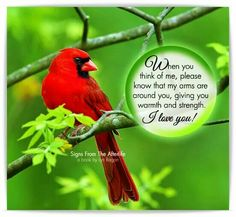 Signs From The Afterlife - Cardinals - I Love You Messages From Heaven, Great Quotes, Inspirational Quotes, Motivational Quotes, Grief Poems, I Love You Signs, Bird Quotes, Bird Poems, Miss You Mom