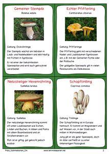 Pilze Sammelkarten