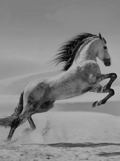horse art - How Long Do Horses Live and Everything about Horse Age All The Pretty Horses, Beautiful Horses, Animals Beautiful, Horse Photos, Horse Pictures, Horse Age, Animals And Pets, Cute Animals, Andalusian Horse
