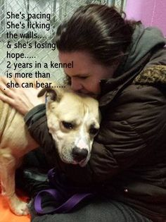 3-13-14 this poor dog is STILL in need of rescue!!!! Please spread the word about Ginger! Read her SAD SAD story and help her, PLEASE!!!!Ginger, young boxer mix, is losing her mind after living 2 years in a kennel.  Feb. 11