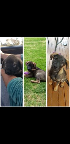 Just thought I'd share my puppy growing up http://ift.tt/2hCp2UT cute puppies cats animals