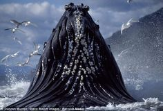 Magnificent Creatures - Humpback Whales Feeding in Alaska (6 photos) - My Modern Metropolis