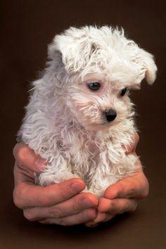Cute Pet Puppies (3)