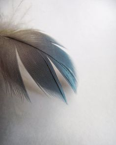 Feather Photography Minimalist Grey Blue Teal Home Decor 10x8 Shimmer... by VictoriaEnglishCharm on Etsy