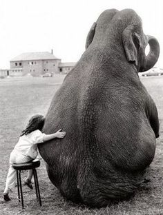 black and white photograph of a child hugging an elephant / photograph by John Drysdale