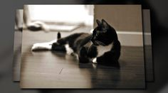 Animoto Video   Our new cats... Mr. Topper & DeAngelo
