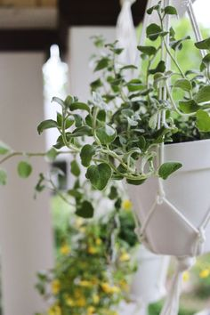 Terracota planters painted white... so simple and beautiful // DIY Hanging Planters from A Beautiful Mess